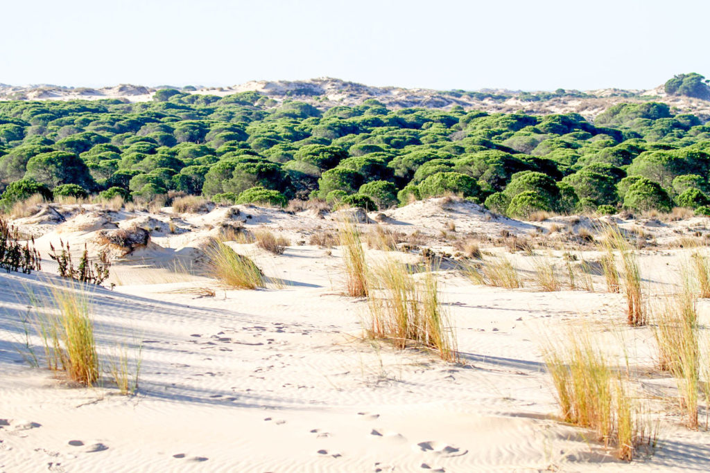 Photo of sand dunes in Doñana National Park in Spain, a unique Seville day trip
